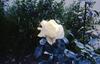 SM_RAID 00060.jpg